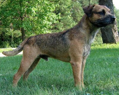 Tierforum Etwas Kompliziert Ersthundehalter Diese Rasse Uberhaupt Hund